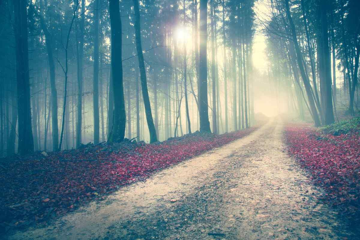 How to Navigate Power on the Spiritual Path