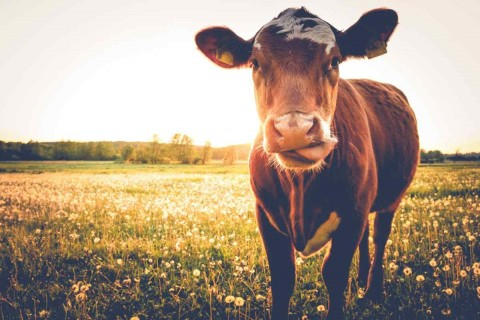 8 Major Diseases Linked to Red Meat Consumption in Largest Study So Far