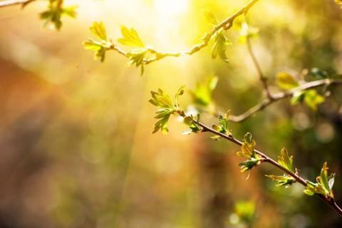 Three Blessings in Spiritual Life – Part 2: Inner Fire