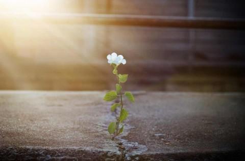 True Resilience – Part 2: Awakening through All Circumstances