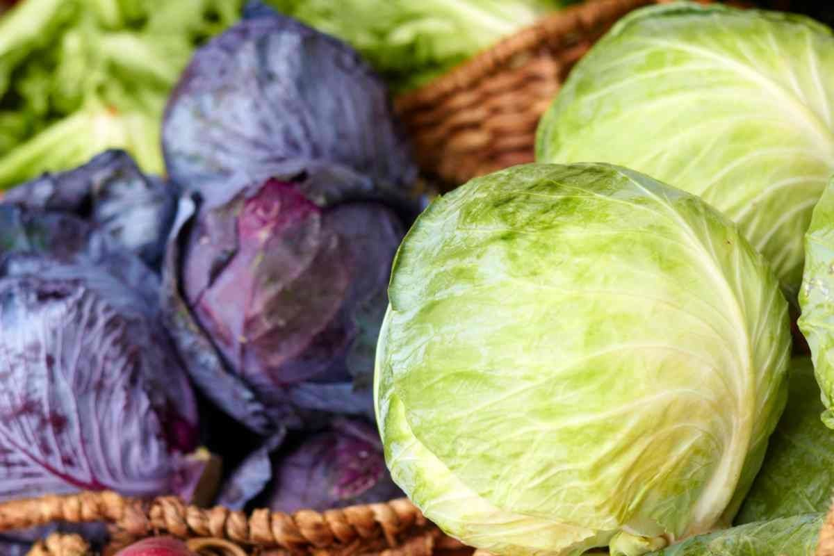 Ode to Cabbage — the unsung hero!