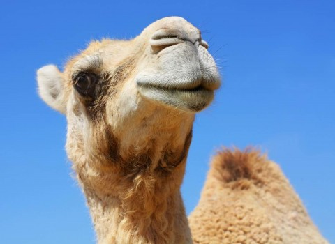 Braden-Town-Tether-Your-Camel