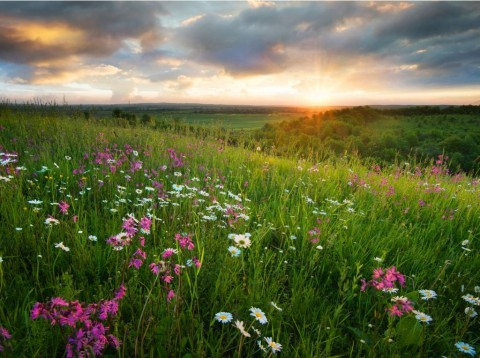 flowers-on-the-mountain-field-during-sunrise-beautiful-natural-in-picture-id903873992