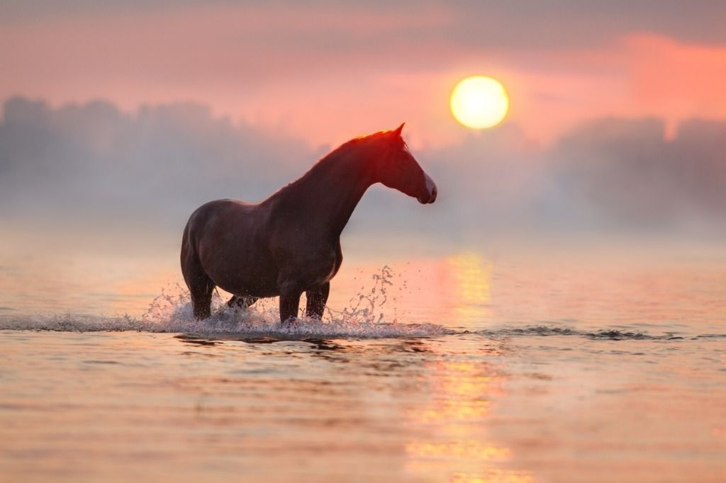 horse-in-water-at-sunrise-picture-id873197024