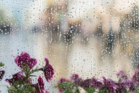 purple-flowers-behind-the-wet-window-with-rain-drops-blurred-street-picture-id695633294