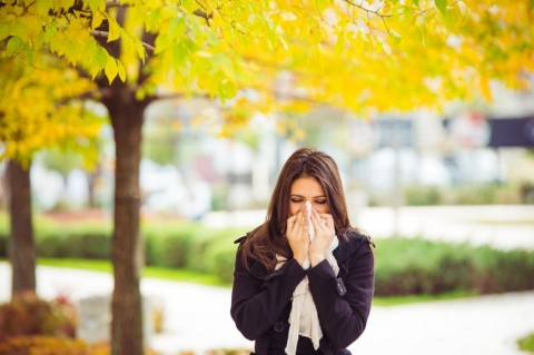 allergy-season-picture-id503920992