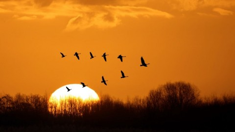 flying-birds-over-background-landscape-with-orange-sky-picture-id623784082