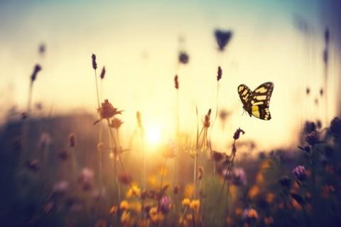 butterflyspring