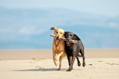 dogsadapting