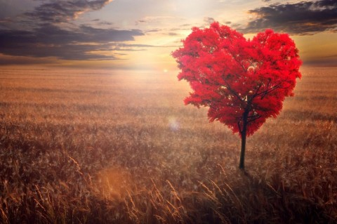red-heartshaped-tree-in-the-field-against-the-background-of-a-decline-picture-id898937938