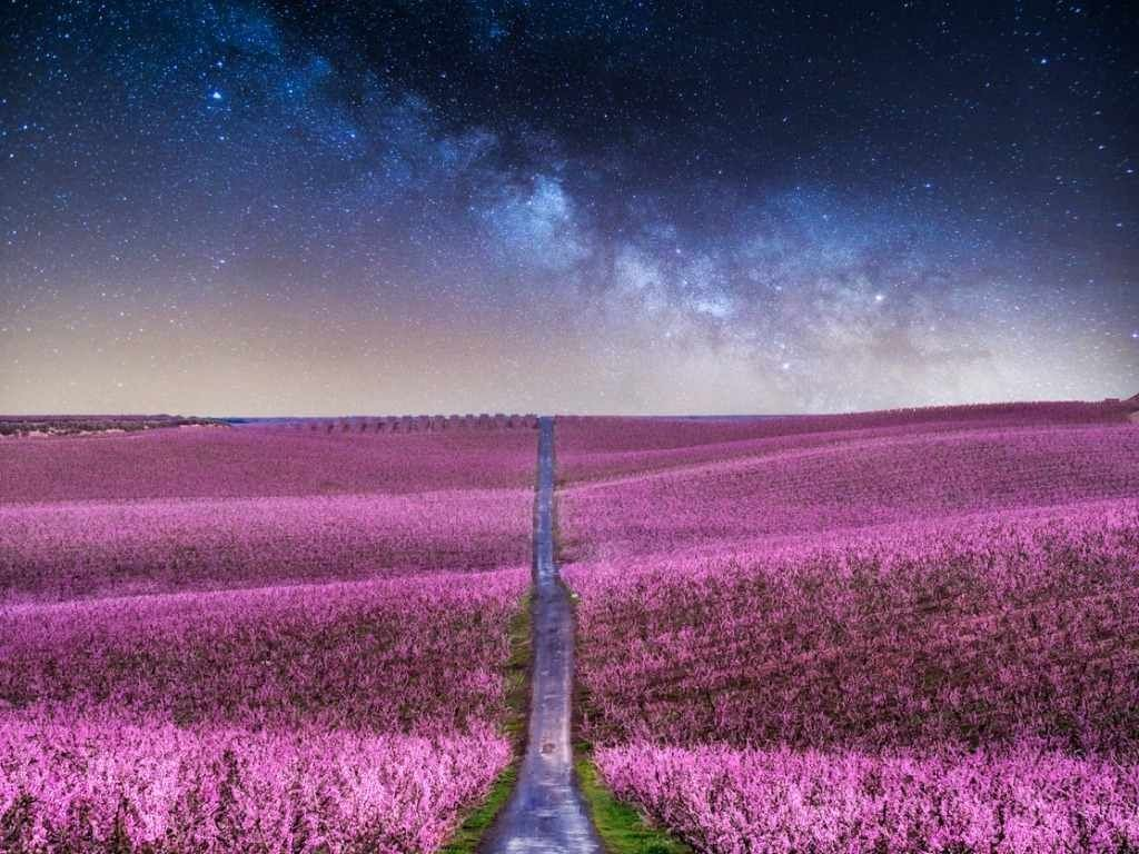 Trading In the Afterlife for One Life