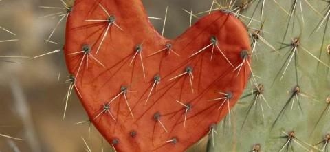cactusheart