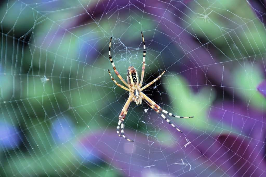 Meditation: Everything Belongs