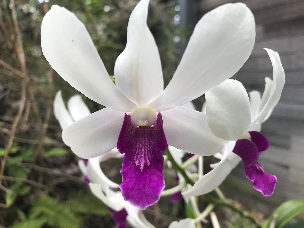 Who Would You Be Without Identity?