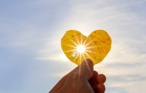 close-up-shot-of-hand-holding-yellow-leaf-of-heart-shape-with-sun-picture-id1036050176