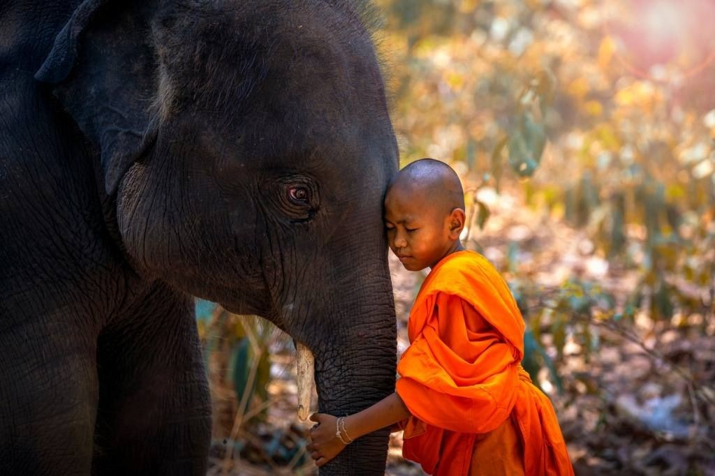 What is the ultimate act of compassion?