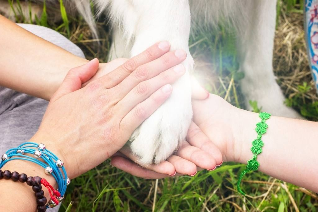 Wise Investigation: Dissolving the Trance