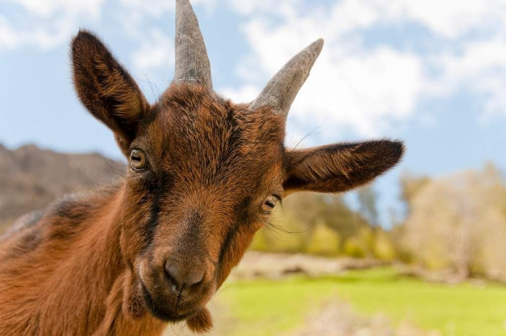 The Spirit In Our Stories