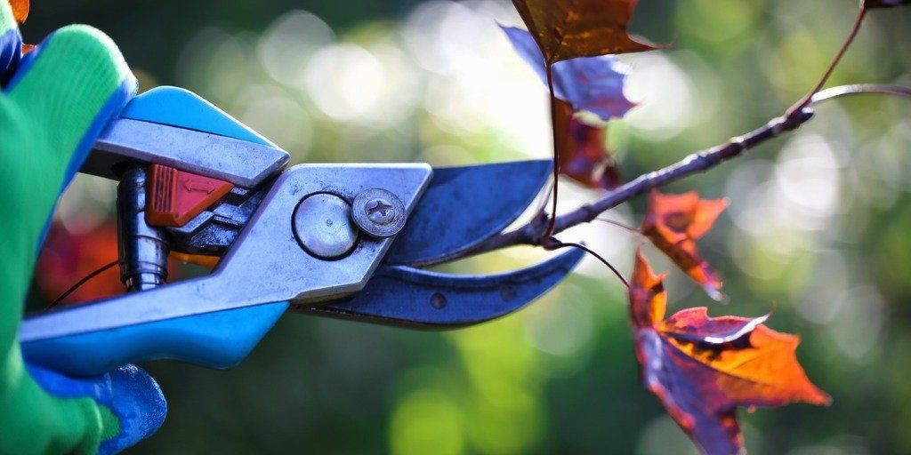 It's Pruning Time!
