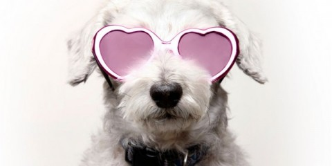 dog-with-rose-colored-glasses-picture-id536314147