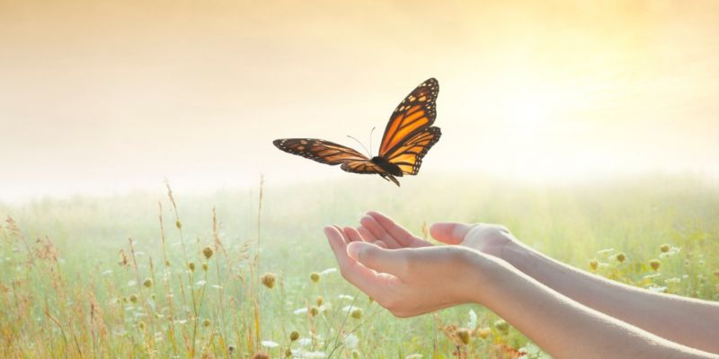 girl-releasing-a-butterfly-picture-id169937958