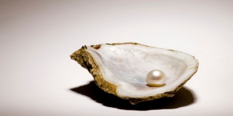 singe-pearl-sitting-in-an-oyster-shell-on-a-light-background-picture-id121124449