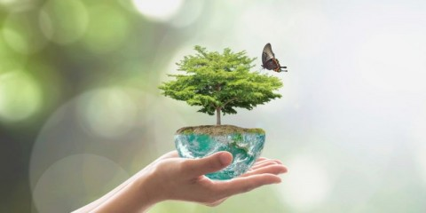 planting-tree-on-green-globe-for-arbor-day-world-environment-and-csr-picture-id961077862