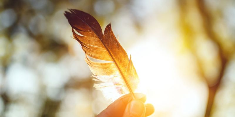 feather-and-sunset-picture-id524172236