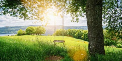 old-wooden-vintage-swing-hanging-from-a-large-tree-on-green-grass-in-picture-id1190147620