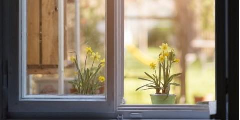 daffodil-narcissus-picture-id482437547