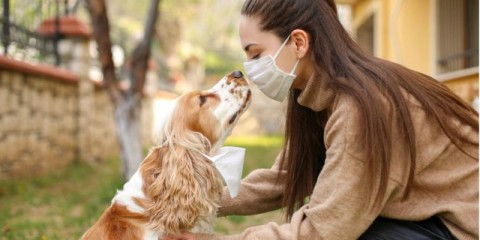 chinese-coronavirus-2019ncov-dangerous-for-pets-picture-id1215567949