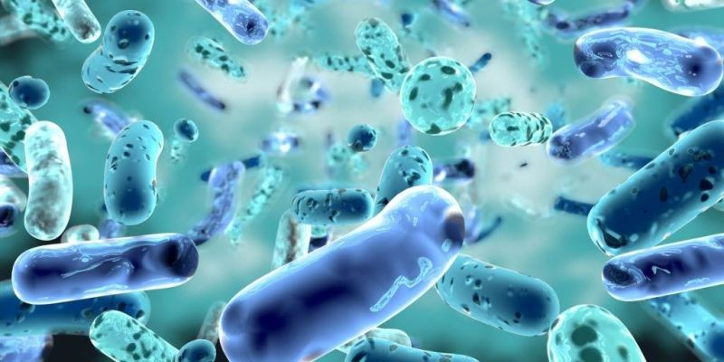 Your Microbiome: The Most Promising Facts