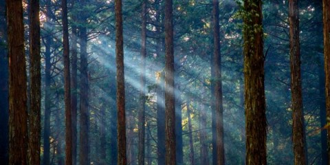misty-forest-with-sunlight-picture-id686149666