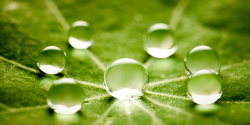water-drops-on-green-leaf-picture-id125143094