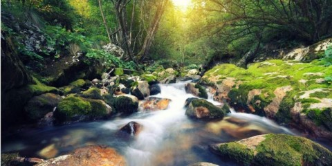 mountain-stream-picture-id478639070