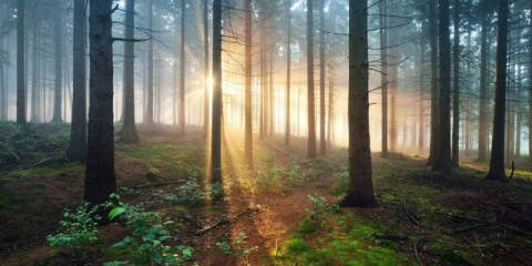 sun-rays-in-a-dark-misty-forest-osnabruck-gemany-picture-id1179385633