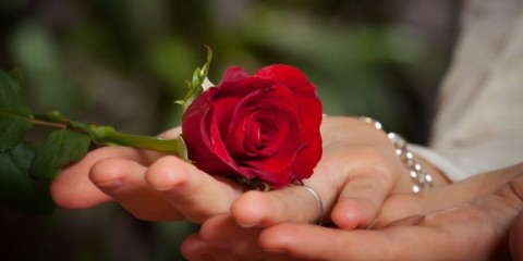 red-rose-in-the-palm-of-your-hand-picture-id162433466