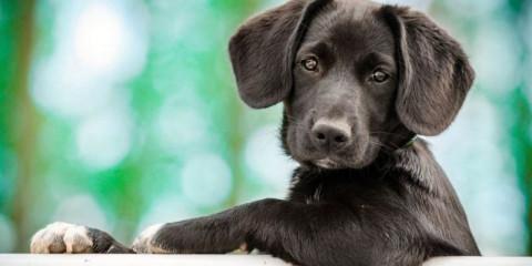 ego-puppy