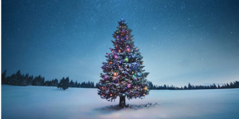 christmas-tree-picture-id1270144004