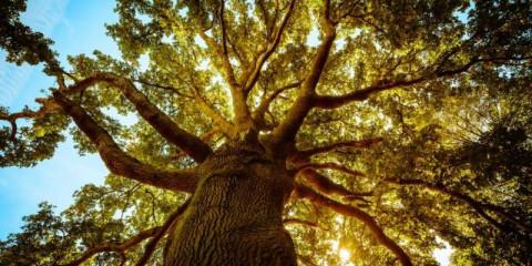 spirittree