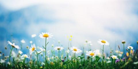 alpine-meadow
