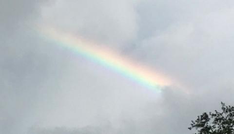 rainbow_PK